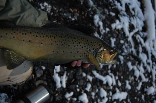 Brave The Cold Gunpowder River