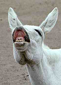 The donkeys laugh at the rank and file