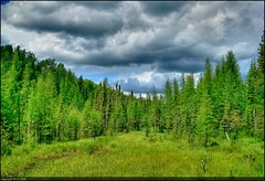 The green Forest (A guy with A camera) Tags: world life wood trees sky terrain canada green nature grass weather pinetree clouds rural forest woodland landscape fz20 woods scenery flickr natural cloudy earth forestry country meadow alberta land environment hdr highdynamicrange boreal ecosystem resources conifer wooded naturalresources abigfave p1f1 123hdr