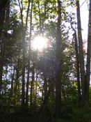 Golden Sunshine in Woods of Kentucky