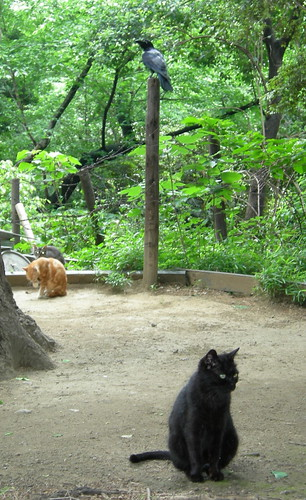 crows and cats, Ueno Park