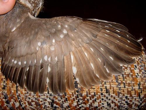 Wing Molt