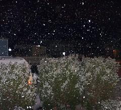 Snow Falling at Night
