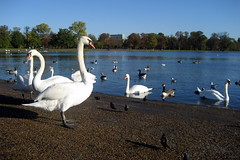 UK - London: Kensington Gardens - Round Pond