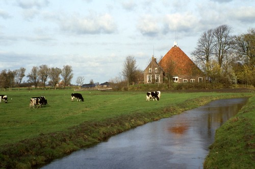 Dutch Pastures