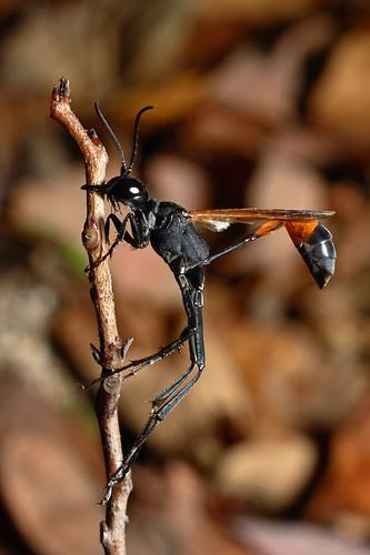 november wasp