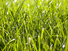 Close up grass