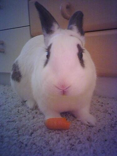 My carrot!