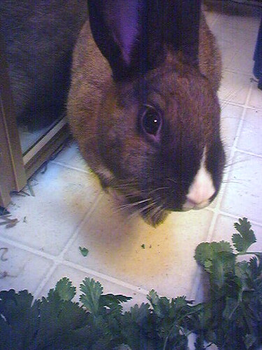 As recommended, we're trying the cilantro…