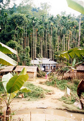 Sylhet forest village scene
