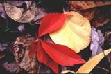 leafprint