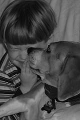 beagle kisses
