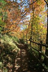 Autumn on Appalachian Trail