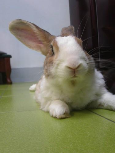 啊兔跳跳跳Ver.2: January 2007