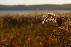 Steninge autumn