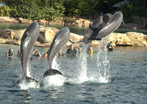 Other people swimming with the dolphins