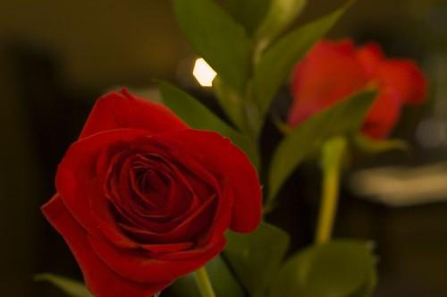 rose-0219