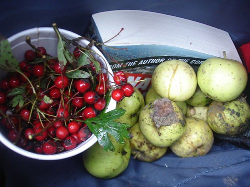 Gathering Hawthorn and Crab Apples