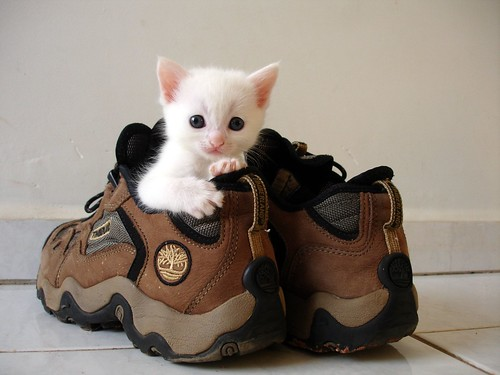 Image result for cats sitting in shoes