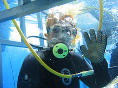 In the Shark Cage Off Isla Guadalupe