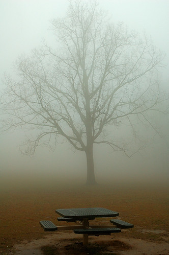 Lonely Tree Waiting for a Visitor