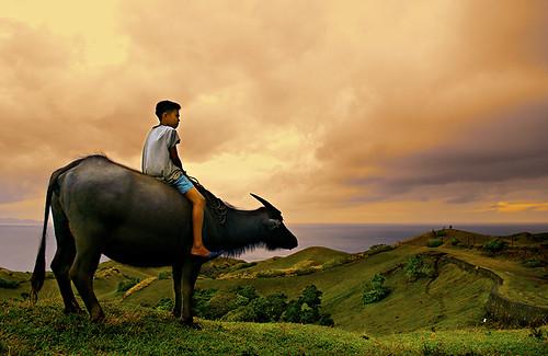 philippines farm batanes pinoy boy carabao rural farm pinoy