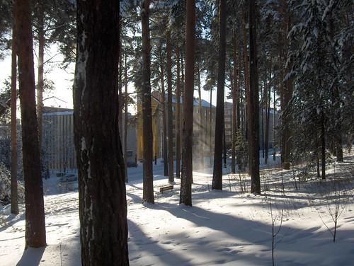 Shadows and a Snow Flurry