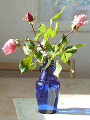 Roses in bottle