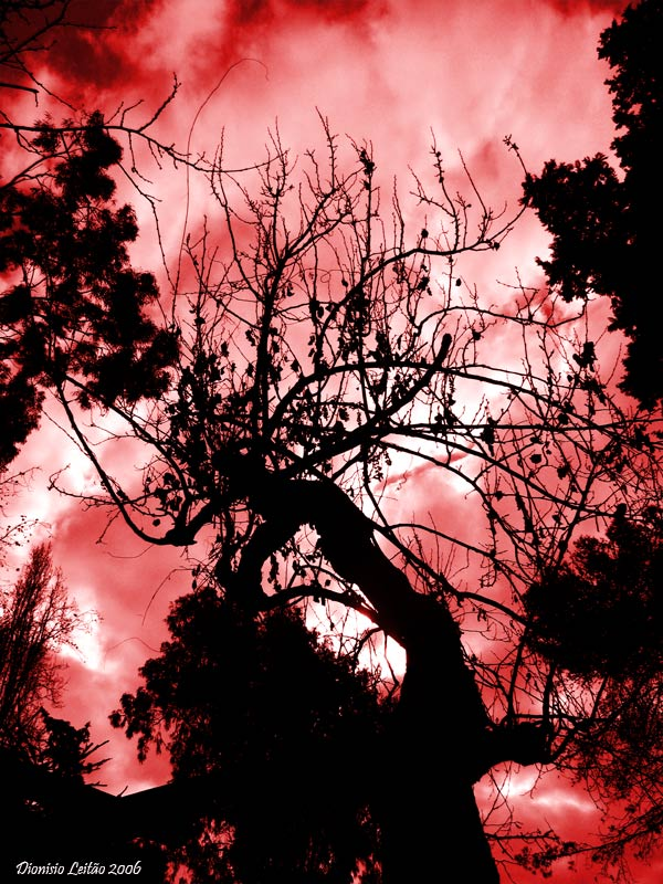 árvore em vermelho