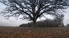 The Tree 39