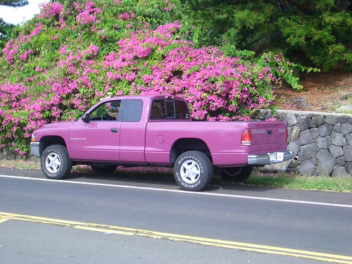Camouflaged pick-up truck by kaukahi.