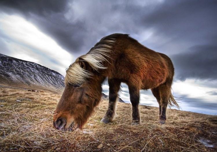 The Place Where Rebekka's Horses Run Free