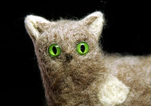 a green-eyed grey Woolcat crazy look