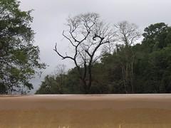 Kollibacchalu Dam -Malenadu Heavy Rain Effects Photography By Chinmaya M.Rao   (90)