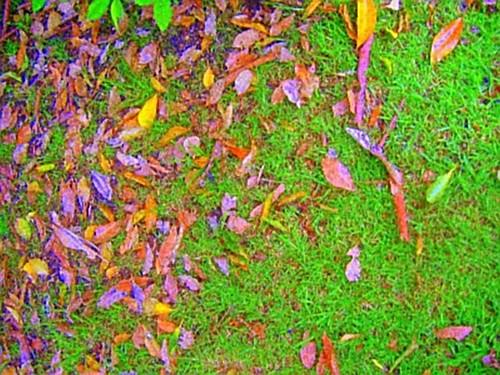 Leaf Lawn