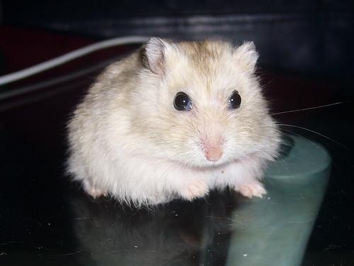 Muffin's stare