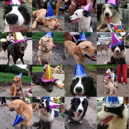 Party Animals!!