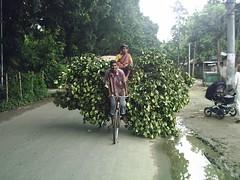 Bangla Daze. (2/6)