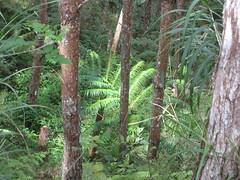 Paupua New Guinea Forest