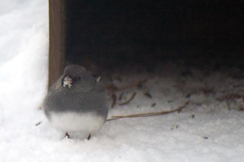 feeder bird