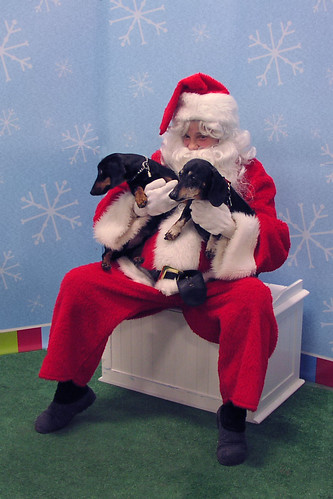 Dachshunds with Santa Claus Christmas