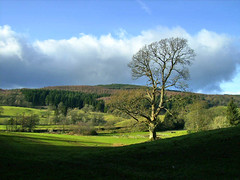 Grizedale Forest National Park, England