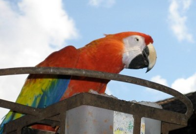 Resident of Antigua, Guatemala