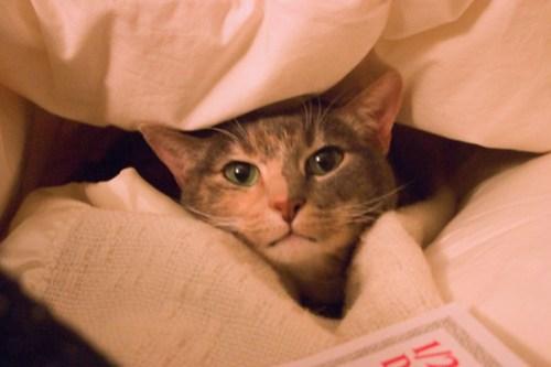 Cat in the comforter closeup