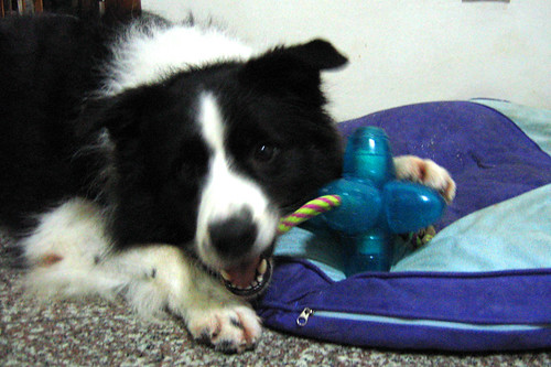 My Orka chew toy!