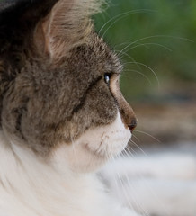"IMG_3183: Cat Profile • <a style=""font-size:0.8em;"" href=""http://www.flickr.com/photos/54494252@N00/355438364/"" target=""_blank"">View on Flickr</a>"
