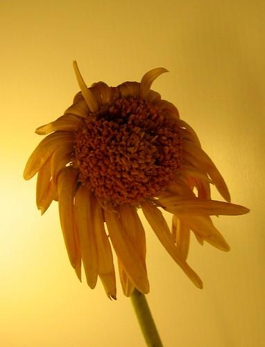 The Little Sad Flower