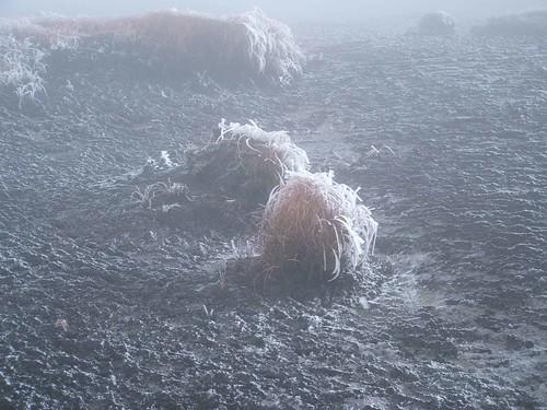 Frozen foilage