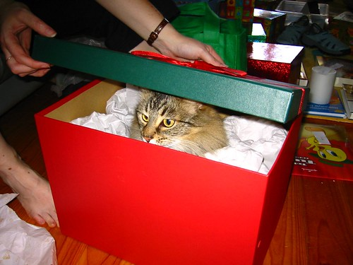 Gifted Cat