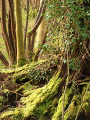 Woodland Moss in Stanmer Park